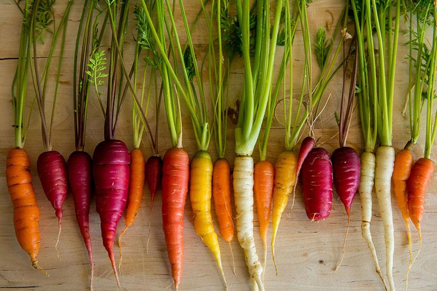 Zanahoria Cocida Como Conseguimos Conservar Todas Sus Propiedades Naturales Y Como Usarla En Tu Cocina Huercasa Saborea El Country Las zanahorias se pueden utilizar para diferentes formas de consumo. huercasa